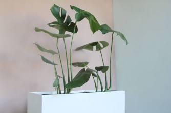 Herbario 1