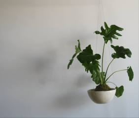 Herbario 18